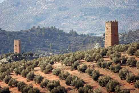 оливковые поля в Хаене