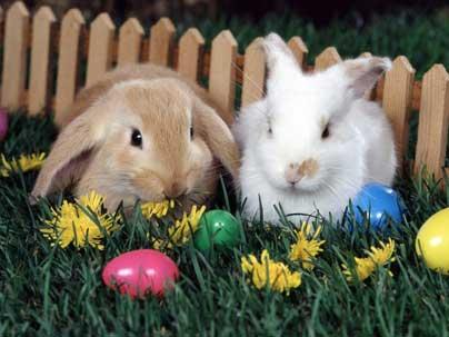 Пасхальные кролики и яйца